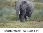 Large Elephant Cooling Down In...