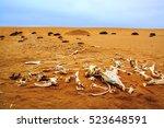 Horse Bones Namibia