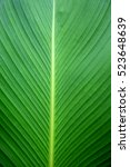 Closeup Green Banana Leaf...