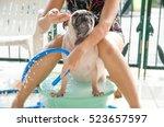 Cute Pug Dog Wash Body  Taking...