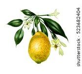 hand drawn botanical...   Shutterstock . vector #523682404