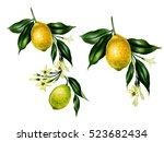 set of watercolor lemon...   Shutterstock . vector #523682434