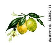 watercolor lemon branch...   Shutterstock . vector #523682461