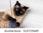 Siamese Cat Playing With A...