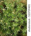 Underbrush Green Background...