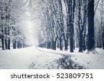 Beautiful Winter Alley. Park...