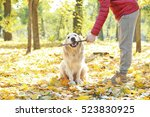 man training his dog in... | Shutterstock . vector #523830925