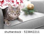 Tabby Cat Lying In Grey...