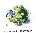 the cabbage broccoli hand drawn.... | Shutterstock . vector #523872895