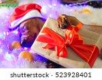 Cute Funny Red Dachshund Dog...