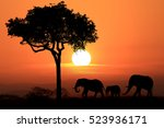 Silhouette Of African Elephant...