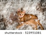 Stock photo  little kitten playing with feathers 523951081