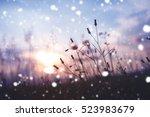 Evening Winter Nature...