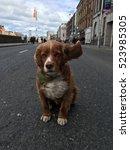 Cocker Spaniel Dog With Ear...