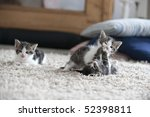 Stock photo three young cats two fight 52398811