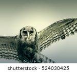 Brown Eagle Falconry Exhibitio...
