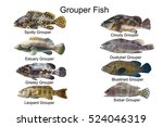 Grouper Fish Set Marine Fish...