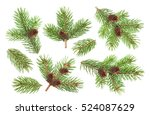 fir tree branch with cones... | Shutterstock . vector #524087629
