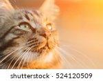 Beautiful Gray Cat In The...