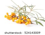 sea buckthorn isolated on the... | Shutterstock . vector #524143009