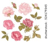 Stock vector rose flower set vector illustration 524179345