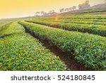 green tea plantation landscape | Shutterstock . vector #524180845
