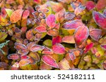 Frozen Plants In Winter With...