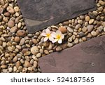 Plumeria Flowers On Gravel And...