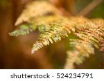 Fern. Beautiful Vivid Color...