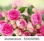 Stock photo border of fresh pink roses close up isolated on white background 524240581