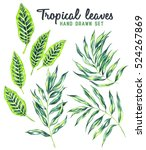 hand drawn set of tropical... | Shutterstock . vector #524267869