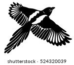great magpie in flight  with... | Shutterstock .eps vector #524320039