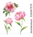 Set Of Watercolor Pink Peonies
