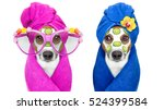 Stock photo jack russell couple of dogs relaxing with beauty mask in spa wellness center moisturizing cream 524399584