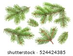 fir tree branch isolated on... | Shutterstock . vector #524424385