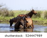 horses  tataru water canal ... | Shutterstock . vector #524447989