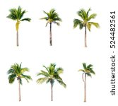coconut trees on white... | Shutterstock . vector #524482561