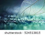 white transparent skeleton leaf ... | Shutterstock . vector #524513815