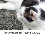 Cat Lying On Road