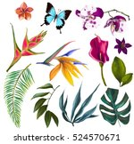 set with exotic flowers | Shutterstock . vector #524570671