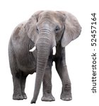 elephant | Shutterstock . vector #52457164