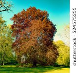 Small photo of Acer rubrum in park. Toned photo