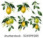 Set Of Watercolor Lemon Tree...
