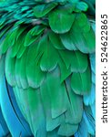The Blue And Green Feathers Of...