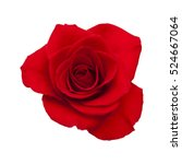 dark red rose isolated on white ... | Shutterstock . vector #524667064