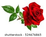 rose isolated on the white... | Shutterstock . vector #524676865