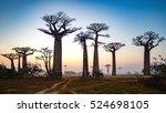 Baobab Alley At Dawn  ...