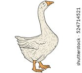 Sketch Grey Goose On A White...