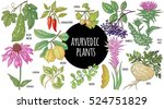 medical plant color isolated on ... | Shutterstock .eps vector #524751829