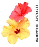 Two Colored Hibiscus Flowers...
